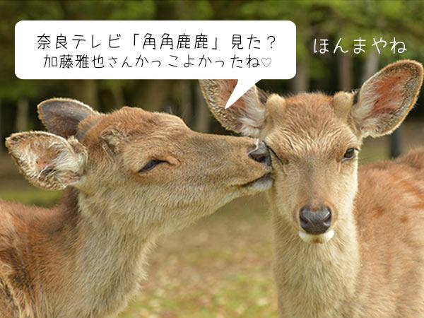 加藤雅也さんの角角鹿鹿で紹介されました